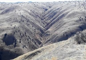 Dendritic(tree-like) drainage patterns,REACH San Benito Parks to visit Panoche Hills