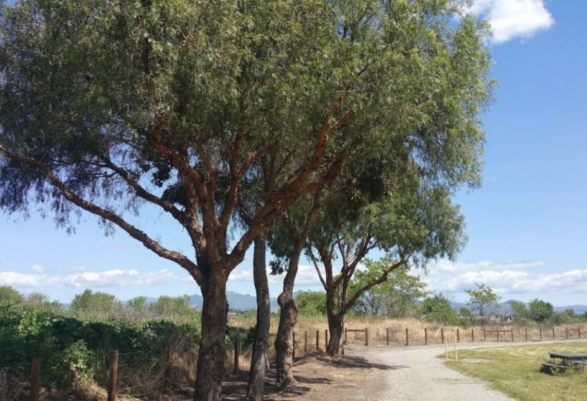 Reach San Benito Parks Brigantino Park