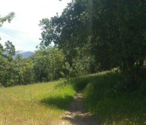 Carmen's Trail needs brushing, too