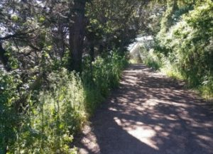 De anza trail A shady part of the De Anza Trail.