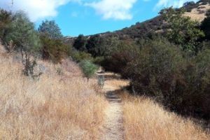 Pinnacles things to do in San Benito parks South wild